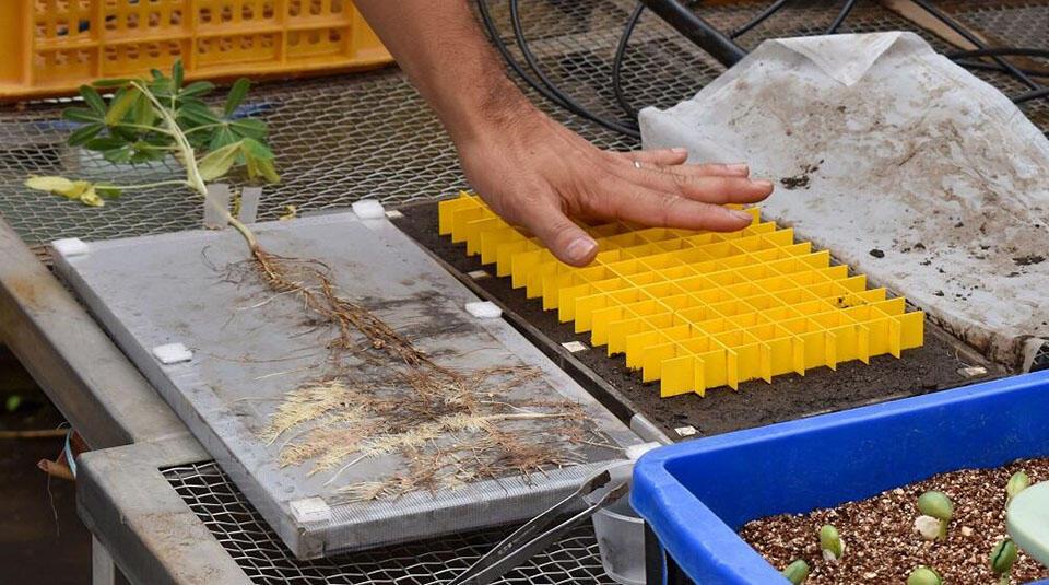 根箱の土壌を2cm×2cmごとの区画に分けている様子